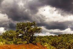 Árvores do zimbro no jardim dos deuses com céu dramático foto de stock