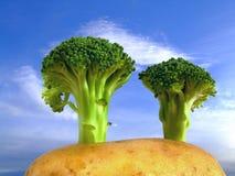 Árvores dos bróculos no monte da batata imagens de stock royalty free