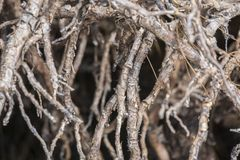 Árvores dos manguezais na floresta Fotos de Stock