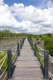 Árvores dos manguezais no céu azul Imagem de Stock Royalty Free