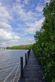 Árvores dos manguezais no céu azul Fotografia de Stock
