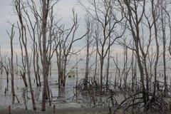 Árvores dos manguezais próximas a praia imagens de stock