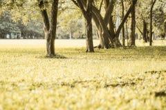 Árvores dos parques no fundo bonito da natureza do tom do vintage dos dias ensolarados fotos de stock