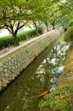Árvores dos peixes e de cereja de Koi Imagens de Stock Royalty Free