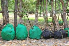Árvores dos Perennials que esperam a plantação no jardim Raiz do envolt?rio para para reduzir a falta da ?gua fotografia de stock royalty free