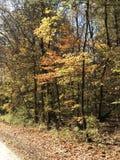 Árvores douradas imagens de stock royalty free