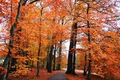 Árvores douradas Foto de Stock Royalty Free