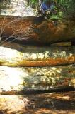 Árvores douradas da caverna do ancião, ¼ ŒUSA de NYï imagens de stock