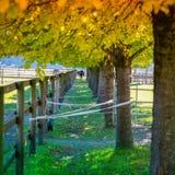 Árvores douradas e verdes na queda Imagens de Stock Royalty Free