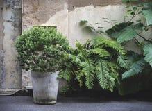 Árvores durante na cidade foto de stock royalty free