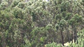 Árvores durante o forte vento vídeos de arquivo