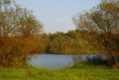 Árvores e água Foto de Stock Royalty Free