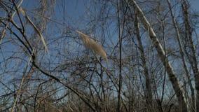 Árvores e arbustos Fotos de Stock Royalty Free