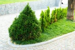 Árvores e arbustos decorativos no projeto dos canteiros de flores imagem de stock royalty free
