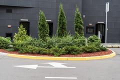 Árvores e arbustos decorativos no projeto dos canteiros de flores fotos de stock royalty free