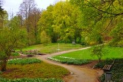 Árvores e arbustos no jardim Foto de Stock Royalty Free