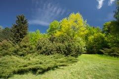 Árvores e arbustos verdes no jardim da mola Projeto do jardim, ajardinando Imagens de Stock Royalty Free