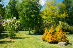 Árvores e arbustos verdes no jardim Projeto do jardim Imagens de Stock