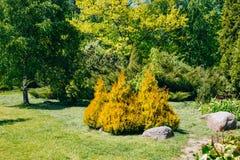 Árvores e arbustos verdes no jardim Projeto do jardim Fotos de Stock