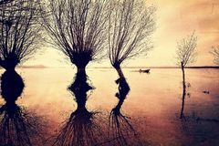 Árvores e barco do lago imagem de stock royalty free