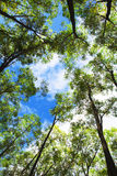 Árvores e céu Fotografia de Stock Royalty Free
