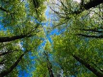 Árvores e céu Fotos de Stock Royalty Free