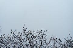 Árvores e céu Imagens de Stock