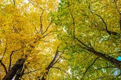 Árvores e céu Imagem de Stock