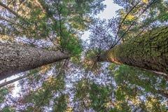 Árvores e céu Foto de Stock Royalty Free