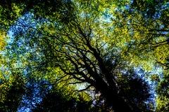 Árvores e céu Imagens de Stock Royalty Free