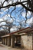 Árvores e céu azul Fotos de Stock Royalty Free