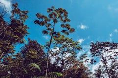 Árvores e céu fotos de stock