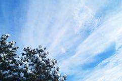 Árvores e céu de Natal Foto de Stock Royalty Free