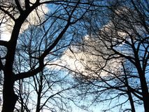 Árvores e céu do inverno fotografia de stock
