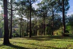 Árvores e céu em jardins botânicos elevados da montagem fotografia de stock
