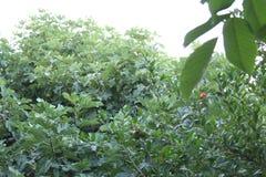 Árvores e céu no skikda fotografia de stock royalty free