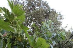 Árvores e céu no skikda foto de stock royalty free