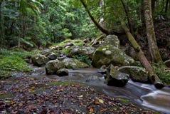 Árvores e córrego da floresta tropical fotos de stock royalty free