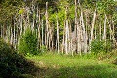 Árvores e cabana do nativo americano imagem de stock