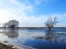 Árvores e campo de inundação na mola, Lituânia fotos de stock
