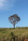 Árvores e campos Imagens de Stock Royalty Free