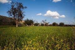 Árvores e campos foto de stock royalty free