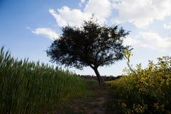 Árvores e campos fotos de stock royalty free