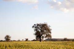 Árvores e campos imagens de stock