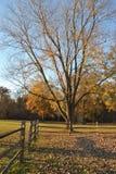 Árvores e cerca da queda Imagem de Stock