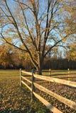 Árvores e cerca da queda Imagens de Stock