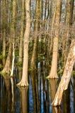 Árvores e espelhar do céu Imagens de Stock