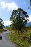 Árvores e estrada Imagens de Stock Royalty Free