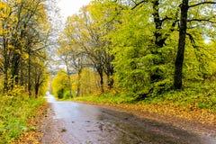 Árvores e estrada amarelas de floresta do outono imagens de stock