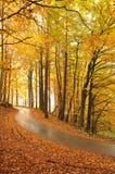 Árvores e estrada bonitas do outono Foto de Stock